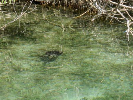 Wasserschildkröte Kournas See Kreta